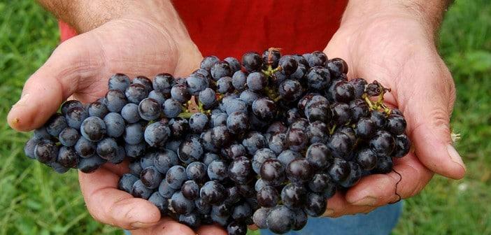 Trentino Weinanbau