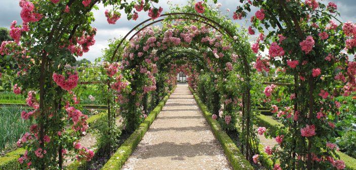 Salò Garda Flowers Salo
